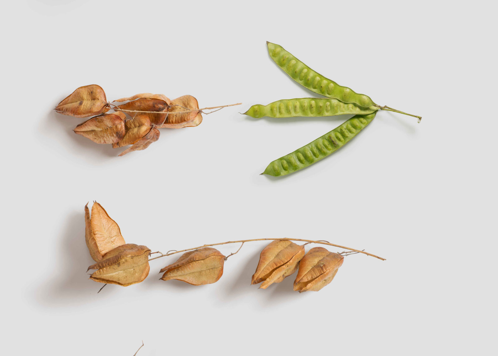leaves Mockup Generators